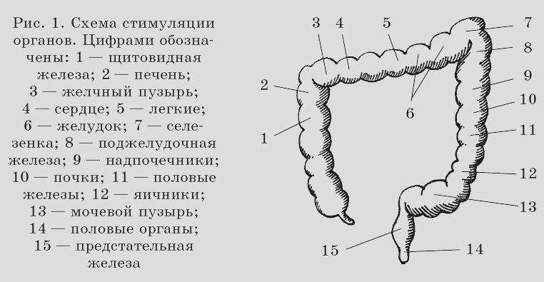 Разрывая кишечник член