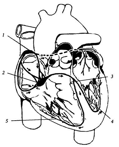 Оргазм биение сонных артерий