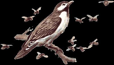 птицы сверху донизу занимавшие отвесные